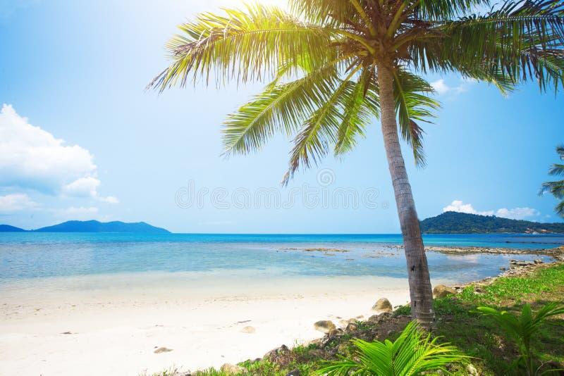 cocotier de plage tropical photo libre de droits