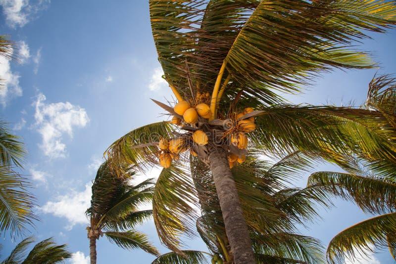 Cocotiers et ciel bleu photo stock