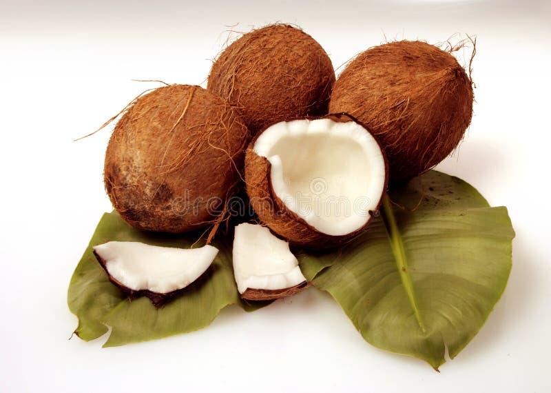 Download Cocunut стоковое фото. изображение насчитывающей плодоовощ - 6868192