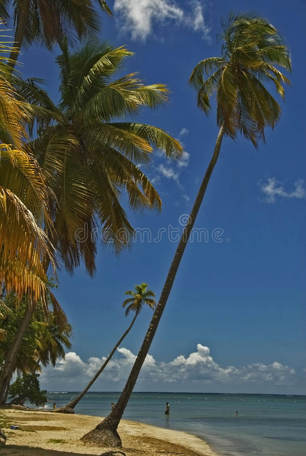 Download Cocunut Palms Royalty Free Stock Photos - Image: 18096208