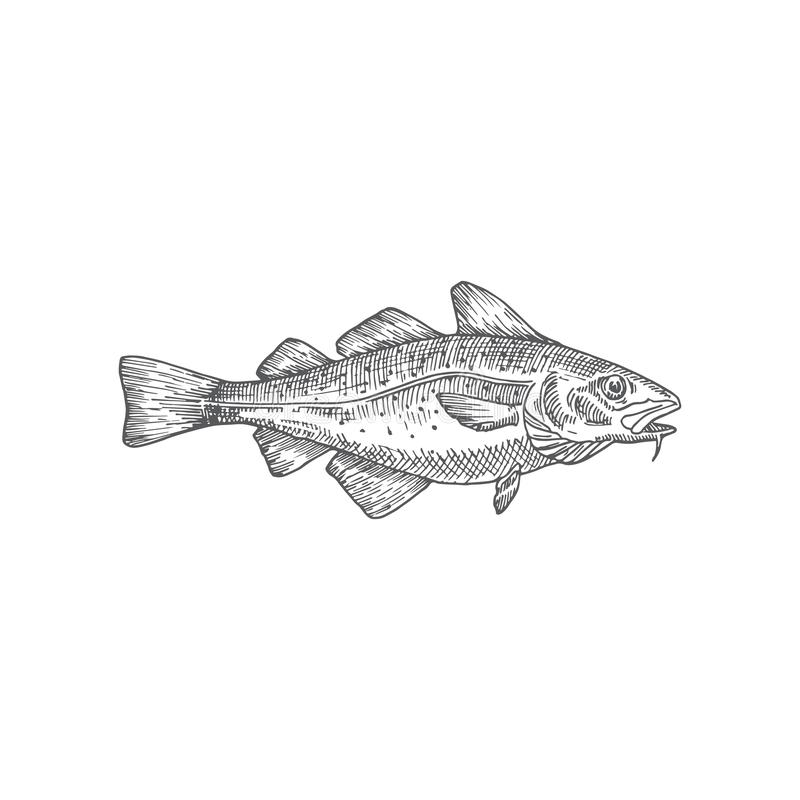 Cod or Codfish Hand Drawn Vector Illustration. Abstract Fish Sketch. Engraving Style Drawing. royalty free illustration