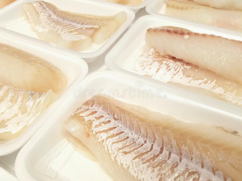 Cod fillets. Fresh and wild cod fillets on white trays  seafood canada usa fish ingredients delicious stock photography