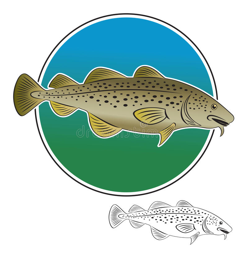 Cod fish. The figure shows a marine fish cod vector illustration