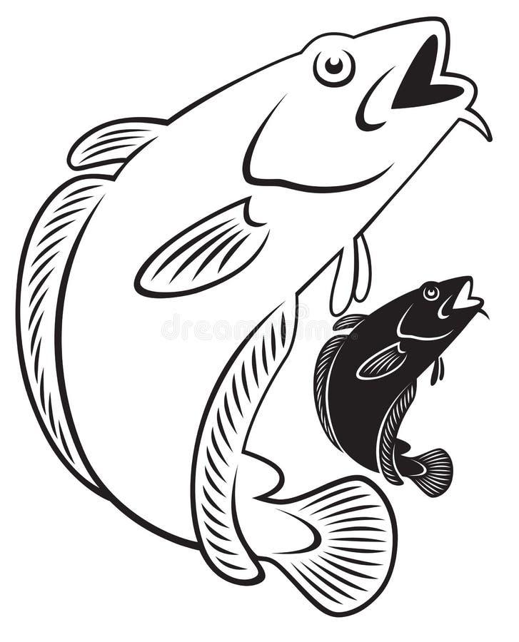 Cod fish. The figure shows a cod fish vector illustration