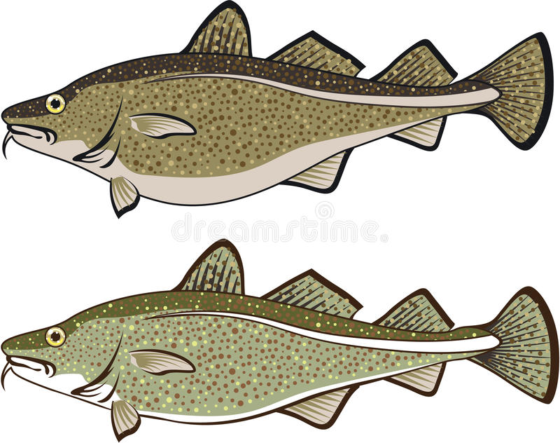 Cod Fish. Illustration clip-art vector eps file stock illustration