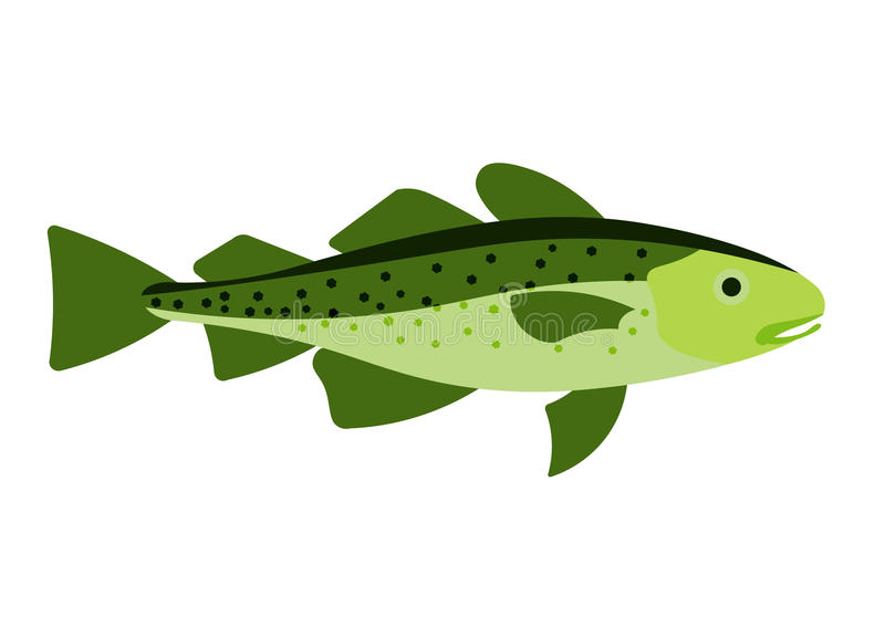 Cod fish illustration. Cod fish on white background. Cod fish .  Cod fish isolated stock illustration