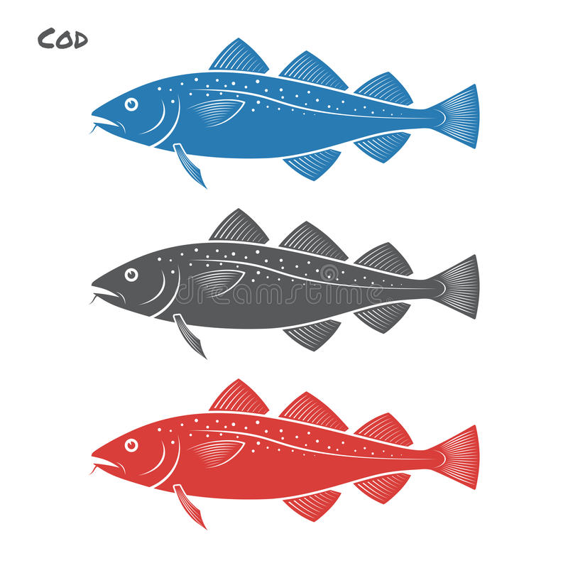 Cod fish vector illustration. On white background vector illustration