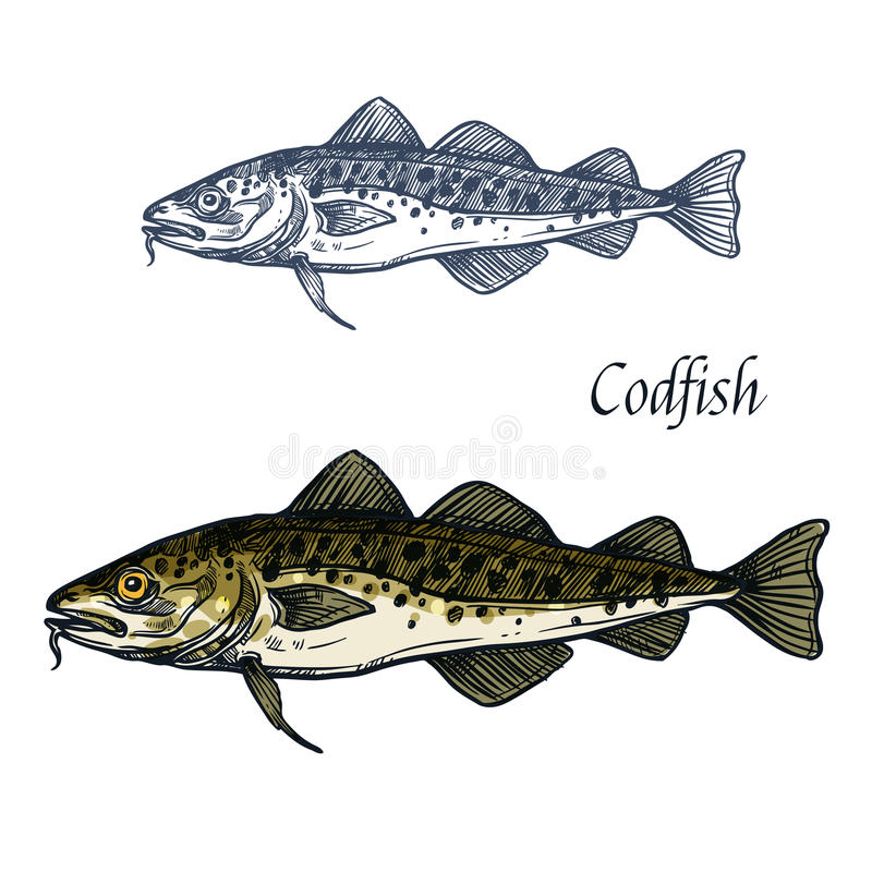 Cod fish vector sketch icon. Sea or ocean codfish pollock or haddock species of marine fauna animal symbol for zoology, seafood or fish food restaurant royalty free illustration