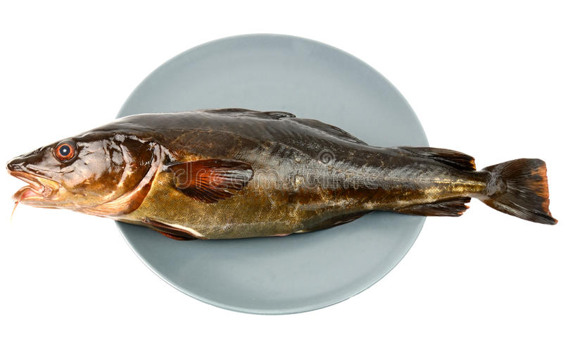 Cod on a plate