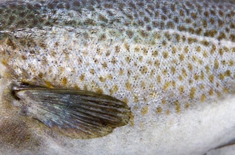 Cod Skin stock photo