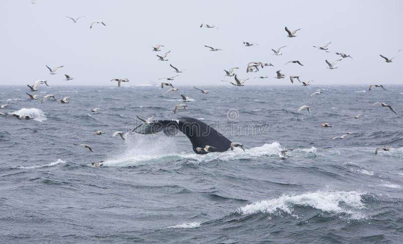 Coda 5 della balena immagini stock libere da diritti