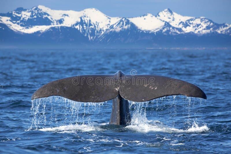 Coda della balena