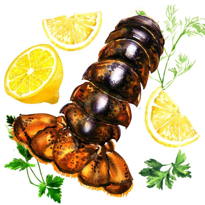 Coda di aragosta cruda con prezzemolo, aneto ed il limone verdi, frutti di mare freschi, illustrazione sopra isolata e disegnata  illustrazione vettoriale