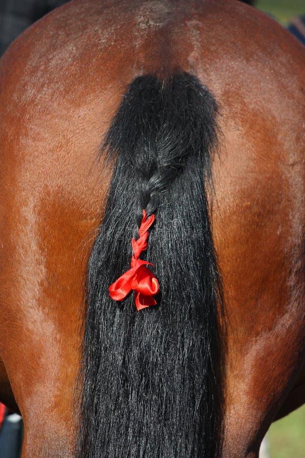 Coda di cavallo della baia con il nastro rosso fotografia stock libera da diritti