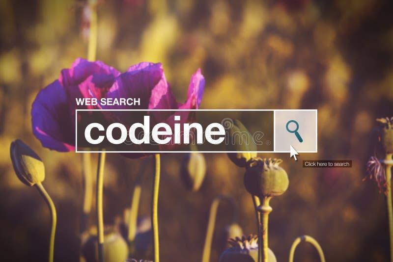Codeïne in Internet-browser onderzoeksdoos stock afbeelding