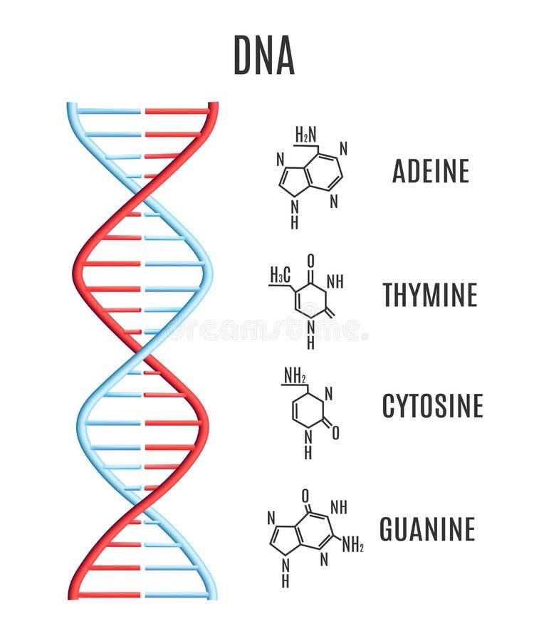 Code génétique de spirale d'hélice de molécule d'ADN de vecteur illustration stock
