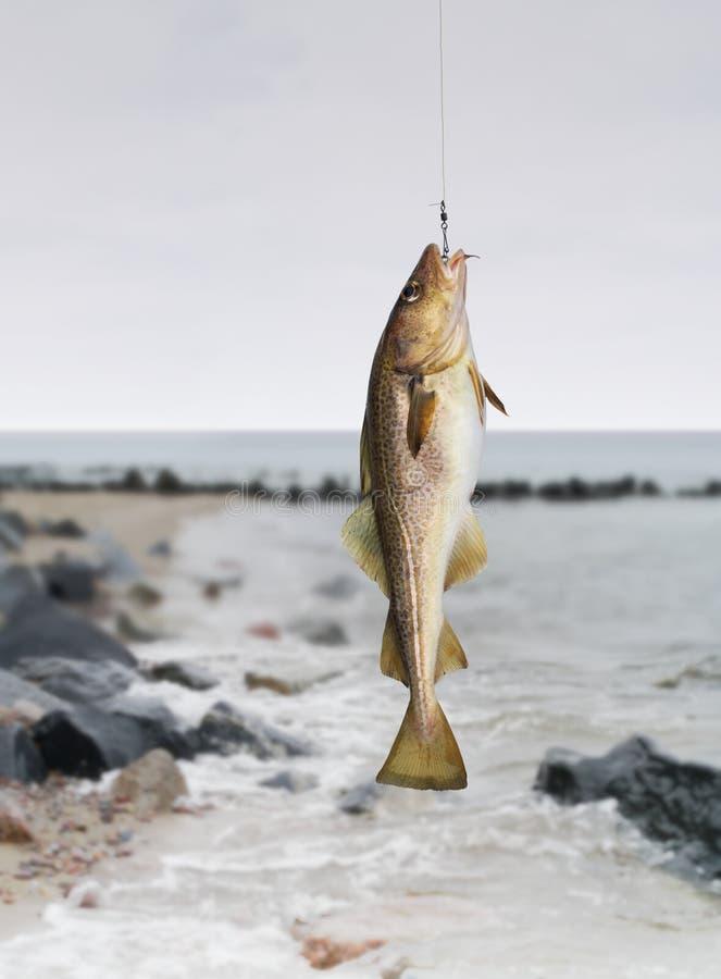 Codfish na dennym tle zdjęcia stock