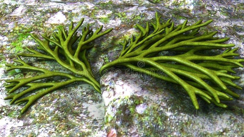 Codium stock illustration. Illustration of codium, algae - 84226571