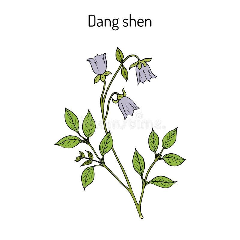 Codonopsis pilosula, eller dang shen eller ginseng för fattig man s medicinal växt vektor illustrationer