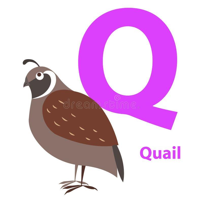 Codornices de Brown en tarjeta del alfabeto con la letra Q plana libre illustration