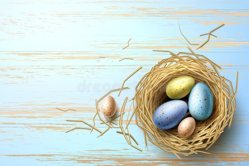 Codorniz do vetor, ovos da galinha no feriado de easter do ninho ilustração royalty free