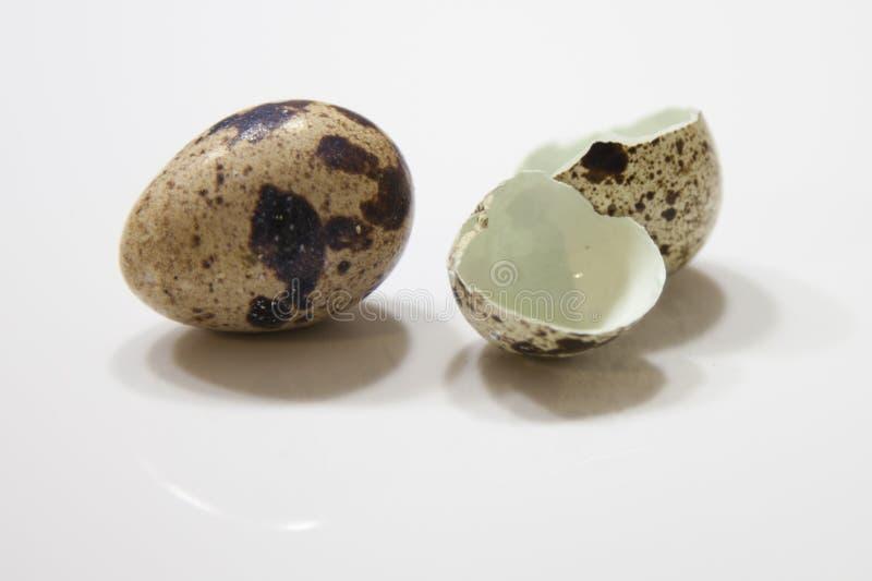 Codorniz egg fotos de stock