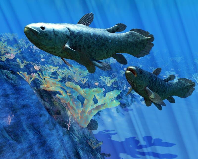 Coelacanth鱼 库存例证