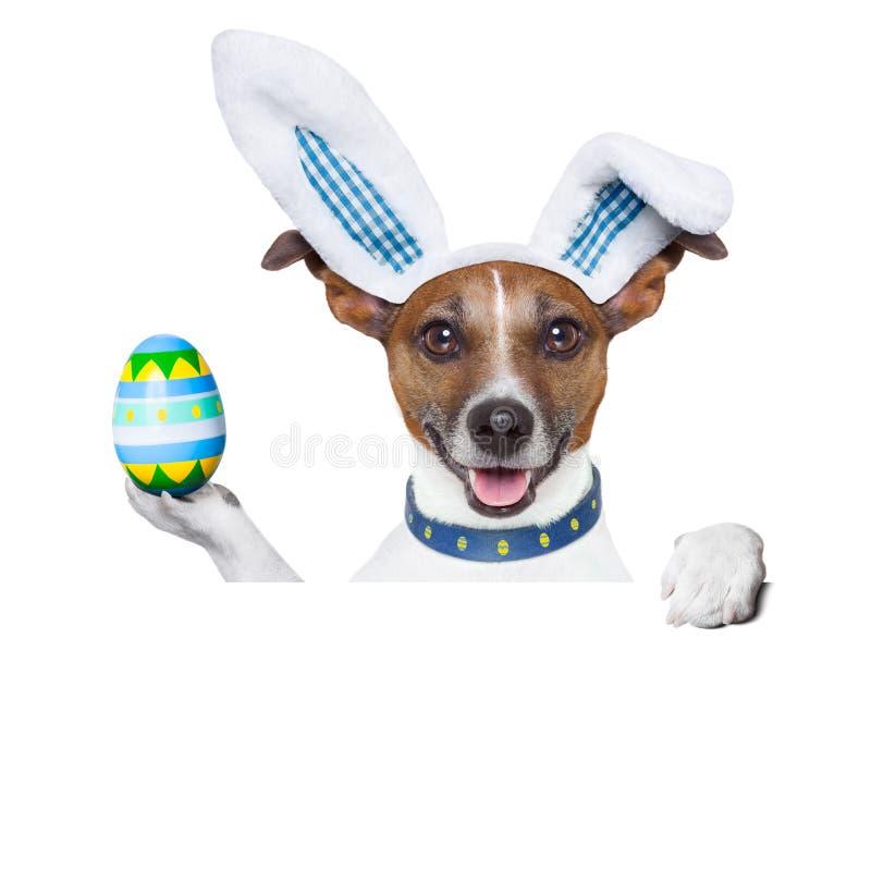 Coelhinho da Páscoa do cão imagem de stock royalty free