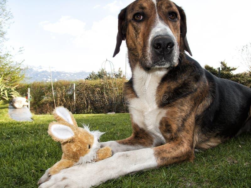 Coelhinho da Páscoa do cão fotografia de stock