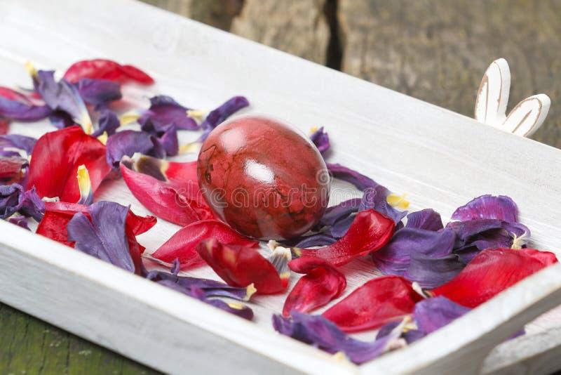 Coelhinho da Páscoa do poço e ovo da páscoa camuflados, escondendo imagens de stock royalty free