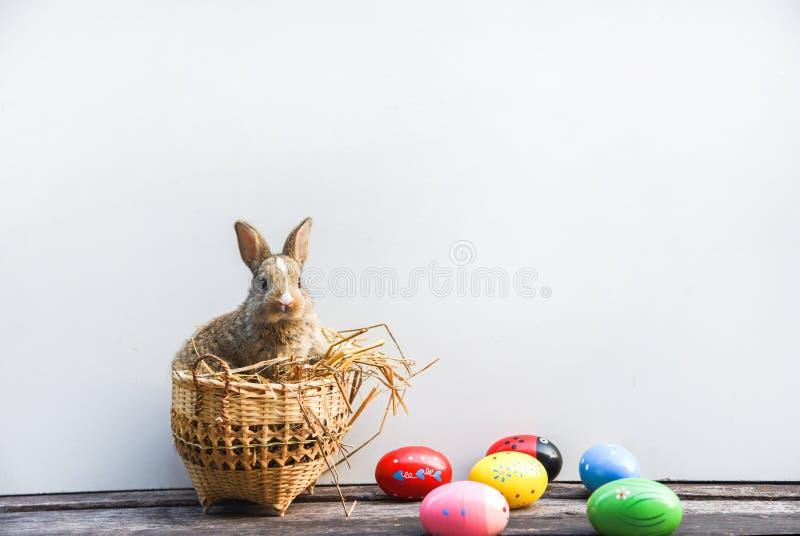 Coelhinho da Páscoa e ovos da páscoa no fundo cinzento fotografia de stock royalty free