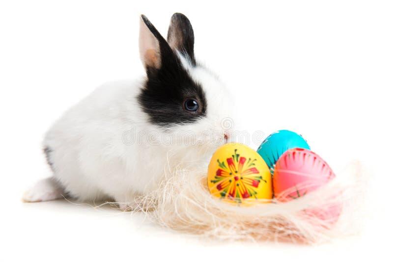 Coelhinho da Páscoa e ovos no ninho imagens de stock