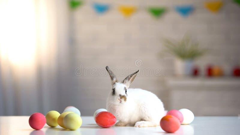 Coelho adorável que senta-se na tabela com ovos coloridos, símbolo da Páscoa, feriado foto de stock royalty free