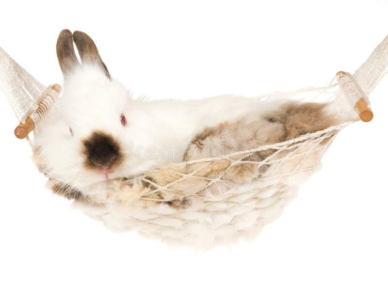 Coelho bonito dentro do hammock branco imagem de stock royalty free