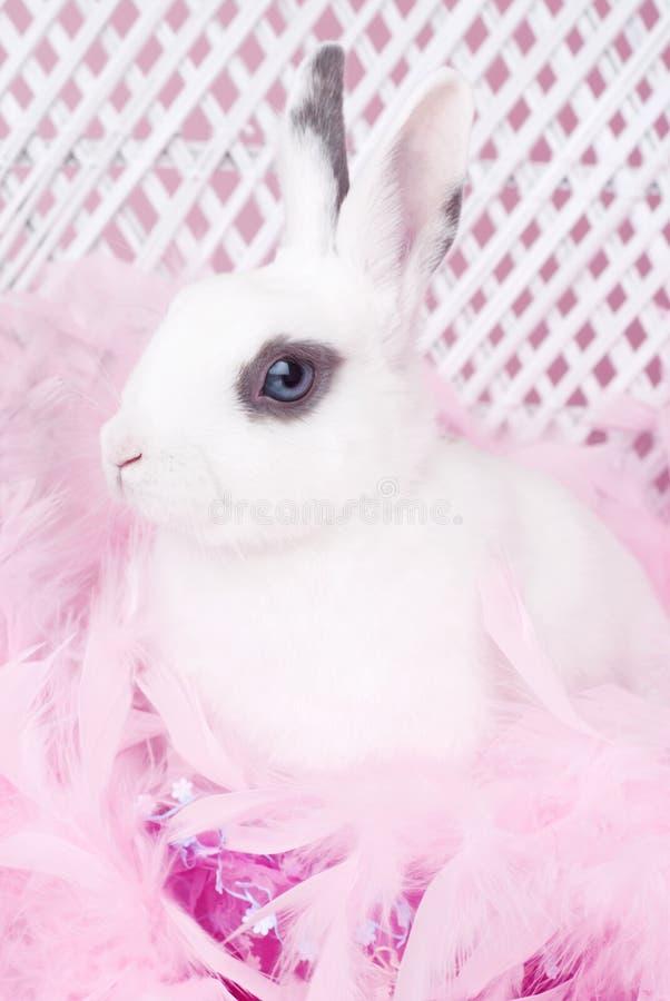 Coelho branco com a boa de pena cor-de-rosa imagem de stock