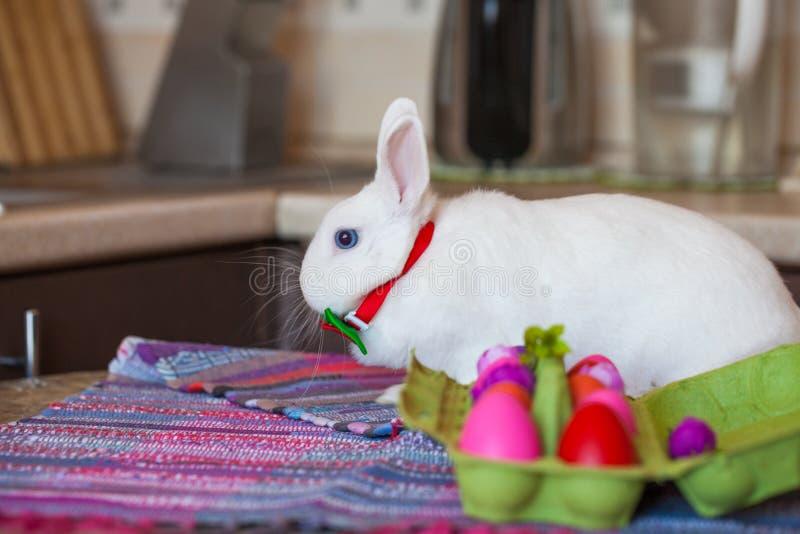 Coelho branco da P?scoa com Menu de Easter ovos coloridos brilhantes dentro fotografia de stock royalty free