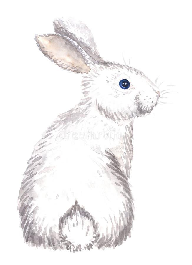 Coelho branco isolado ilustração do vetor