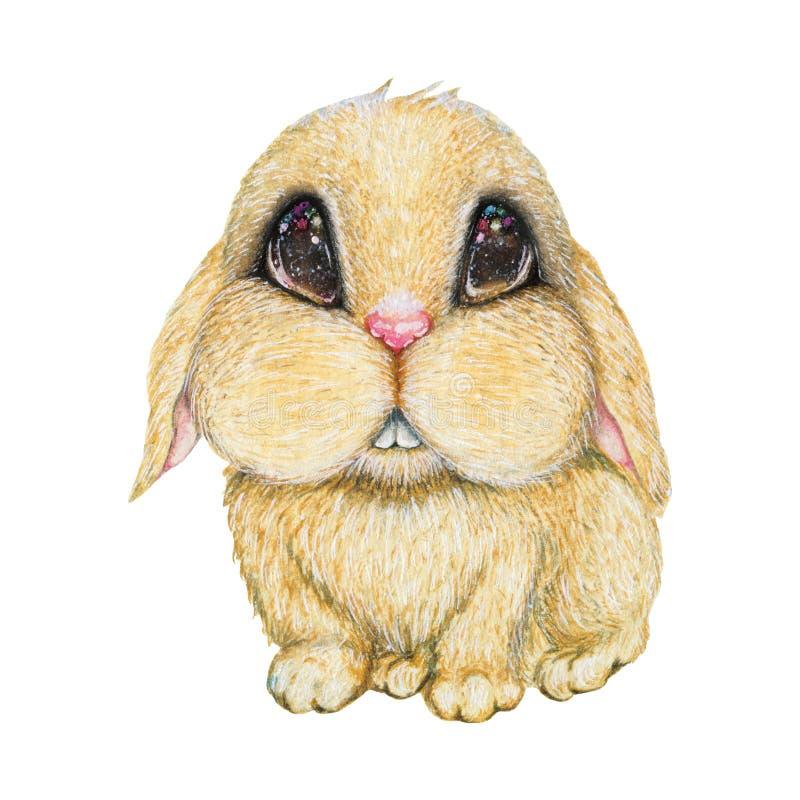 Coelho de coelho bonito com olhos estrelados imagens de stock royalty free