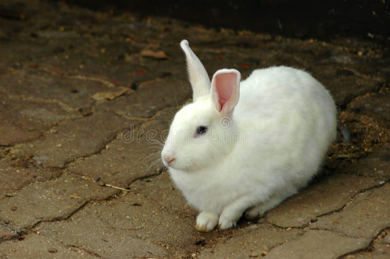 Coelho de coelho de Easter fotos de stock