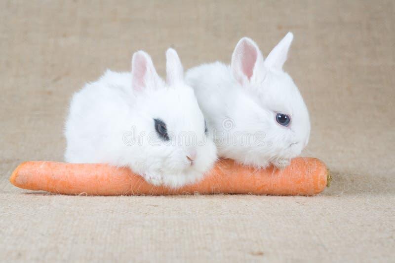 Coelho de dois brancos e uma cenoura foto de stock