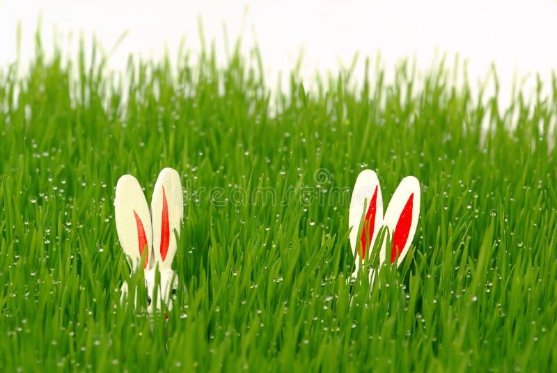 Coelho de Easter 10 fotografia de stock