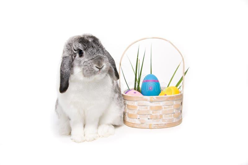 Coelho de Easter imagens de stock