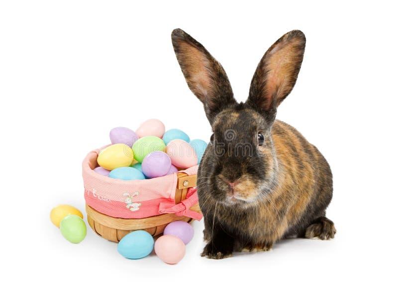 Coelho de Easter ao lado da cesta imagens de stock royalty free