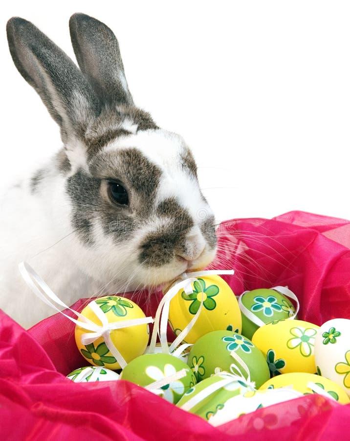 Coelho de Easter com ovos imagem de stock royalty free