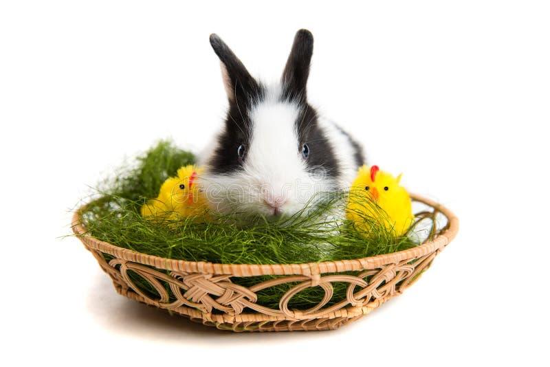 Coelho de Easter com pintainhos e grama na cesta imagens de stock