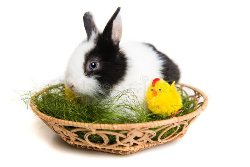 Coelho de Easter com pintainhos e grama na cesta foto de stock