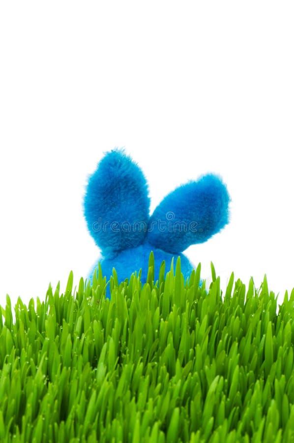 Download Coelho De Easter E Grama Verde Imagem de Stock - Imagem de único, azul: 12811429