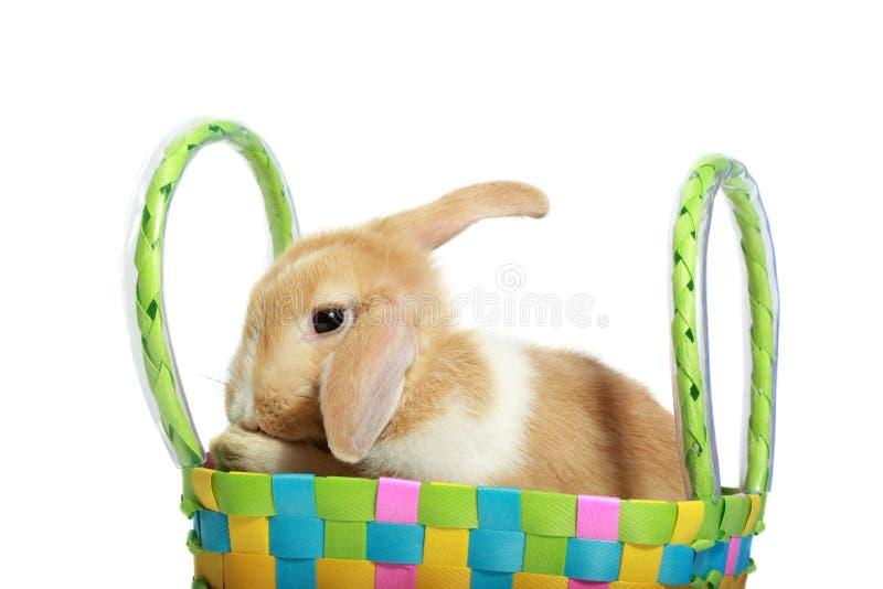 Download Coelho De Easter Em Uma Cesta Imagem de Stock - Imagem de pets, marrom: 12809855