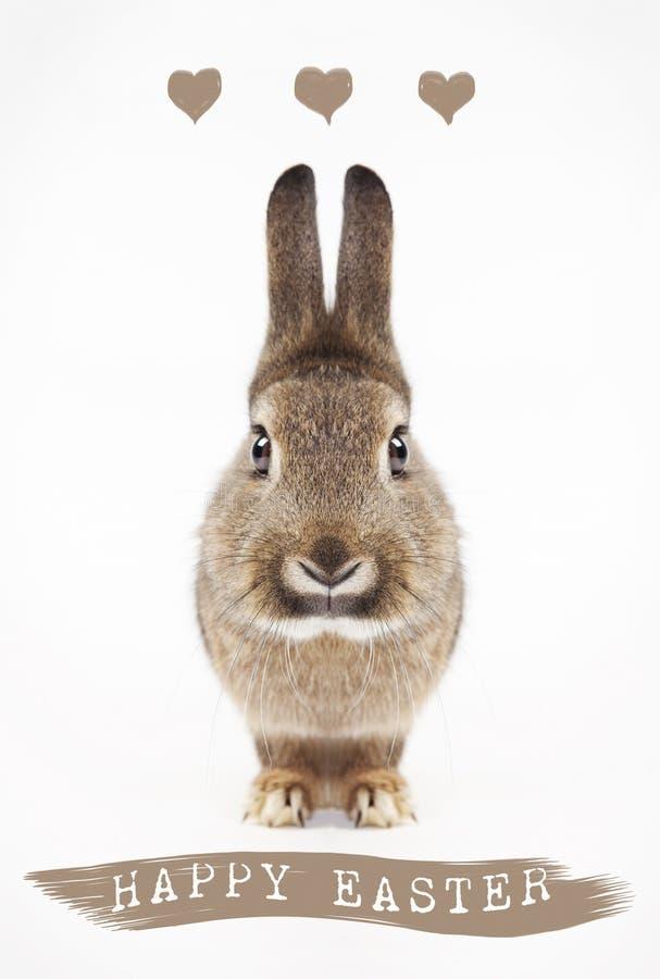 Coelho de Easter feliz foto de stock