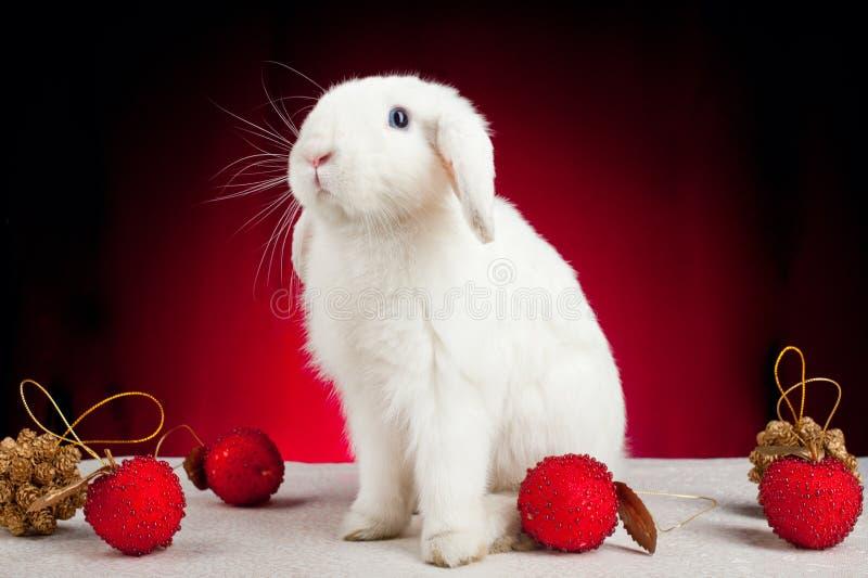 Coelho do Natal branco no fundo vermelho fotos de stock royalty free